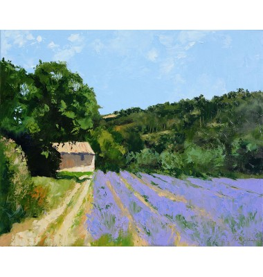 Lavender field with shed